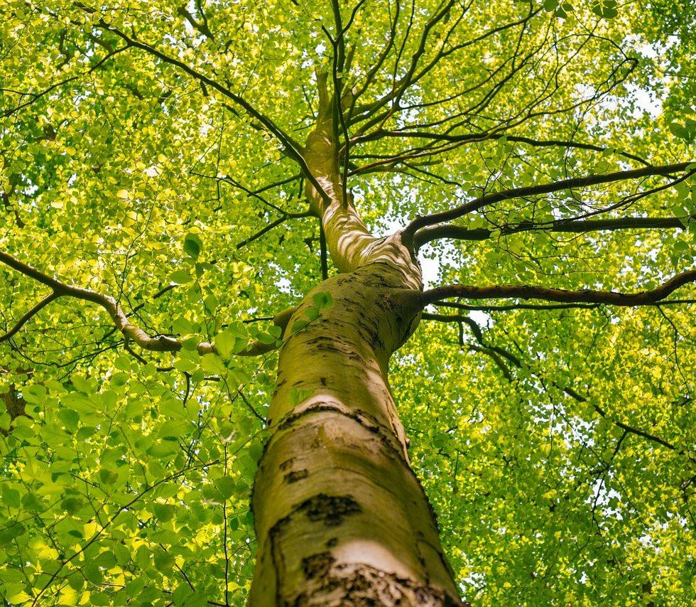 tree-crown-1394394_1280