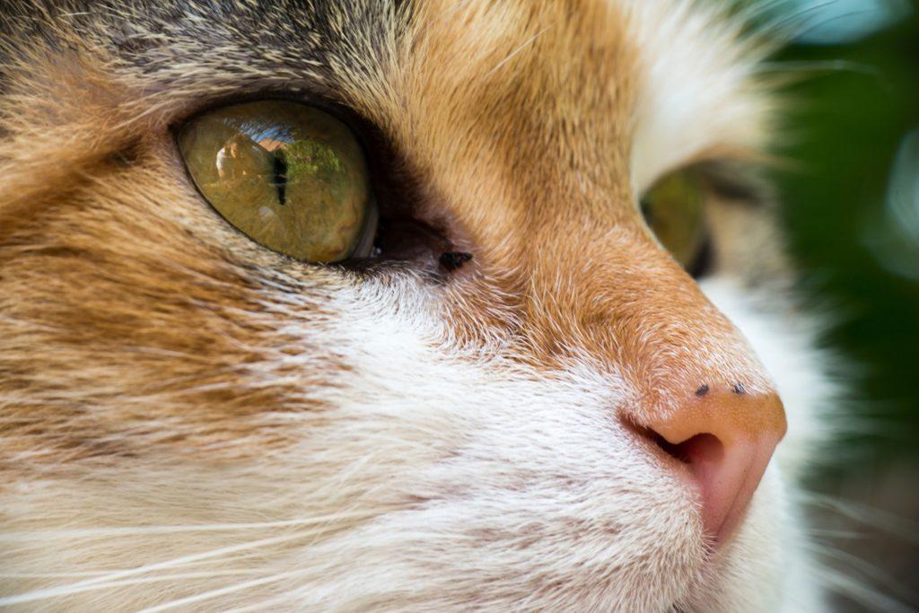 cat-1379035_1920